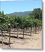 Sonoma Vineyards In The Sonoma California Wine Country 5d24492 Metal Print