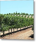 Sonoma Vineyards In The Sonoma California Wine Country 5d24506 Metal Print