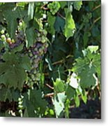 Sonoma Vineyards In The Sonoma California Wine Country 5d24510 Vertical Metal Print