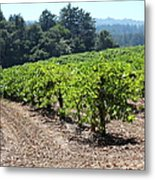 Sonoma Vineyards In The Sonoma California Wine Country 5d24512 Metal Print