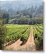 Sonoma Vineyards In The Sonoma California Wine Country 5d24515 Metal Print