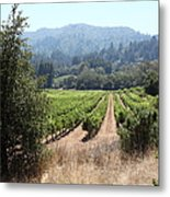 Sonoma Vineyards In The Sonoma California Wine Country 5d24516 Metal Print