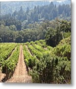 Sonoma Vineyards In The Sonoma California Wine Country 5d24518 Metal Print