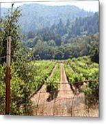 Sonoma Vineyards In The Sonoma California Wine Country 5d24521 Metal Print