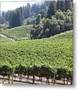 Sonoma Vineyards In The Sonoma California Wine Country 5d24539 Metal Print