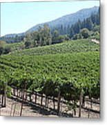 Sonoma Vineyards In The Sonoma California Wine Country 5d24541 Metal Print