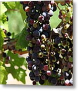 Sonoma Vineyards In The Sonoma California Wine Country 5d24572 Vertical Metal Print