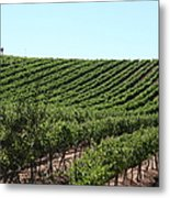 Sonoma Vineyards In The Sonoma California Wine Country 5d24588 Metal Print