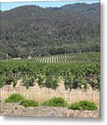 Sonoma Vineyards In The Sonoma California Wine Country 5d24602 Metal Print