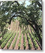 Sonoma Vineyards In The Sonoma California Wine Country 5d24619 Square Metal Print by Wingsdomain Art and Photography