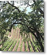 Sonoma Vineyards In The Sonoma California Wine Country 5d24619 Vertical Metal Print