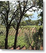 Sonoma Vineyards In The Sonoma California Wine Country 5d24622 Metal Print