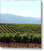 Sonoma Vineyards In The Sonoma California Wine Country 5d24623 Metal Print