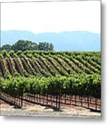 Sonoma Vineyards In The Sonoma California Wine Country 5d24625 Metal Print
