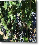 Sonoma Vineyards In The Sonoma California Wine Country 5d24629 Metal Print