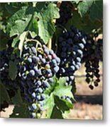 Sonoma Vineyards In The Sonoma California Wine Country 5d24630 Square Metal Print