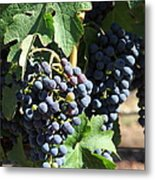 Sonoma Vineyards In The Sonoma California Wine Country 5d24630 Vertical Metal Print