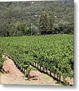 Sonoma Vineyards In The Sonoma California Wine Country 5d24632 Metal Print