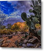 Sonoran Desert 54 Metal Print