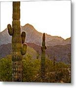 Sonoran Desert II Metal Print by Robert Bales