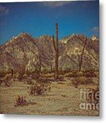 Sonoran Desert Metal Print
