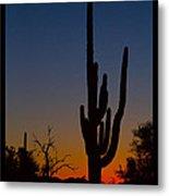 Sonoran Desert Sunrise Poster Print Metal Print