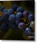 Sour Grapes Metal Print