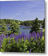 South Bristol And Lupine Flowers On The Coast Of Maine Metal Print