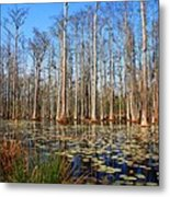 South Carolina Swamps Metal Print