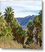 South Side View Of Andreas Canyon Trail In Indian Canyons-ca Metal Print