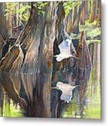 Southeast Missouri Swamp Metal Print