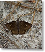 Southern Cloudywing Metal Print
