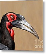 Southern Ground Hornbill Portrait Side View Metal Print
