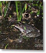 Southern Leopard Frog Metal Print