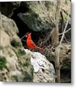 Southern Red Bird By The Flint River Metal Print