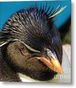 Southern Rock Hopper Penguin Metal Print
