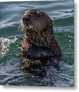 Southern Sea Otter 2 Metal Print