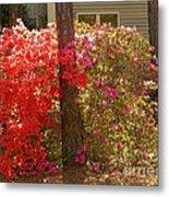 Southern Spring Color Metal Print