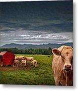 Southern Steer Metal Print by William Schmid