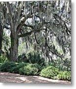 Southern Trees Metal Print