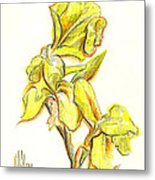 Spanish Irises Metal Print