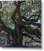 Spanish Moss Draped Limbs Metal Print