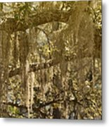 Spanish Moss On Live Oaks Metal Print by Christine Till