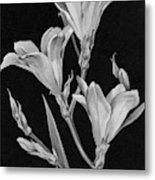 Sparaxis Flowers Metal Print