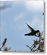 Sparkling Violetear Hummingbird Metal Print