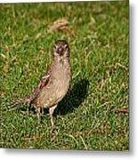 Sparrow 1 Metal Print