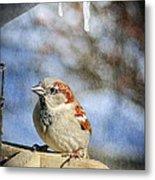 Sparrow 5   Metal Print
