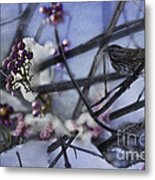 Sparrow And The Beauty Berry Metal Print