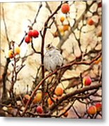 Sparrow In A Crab Apple Tree Metal Print