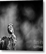 Sparrow In Black And White Metal Print